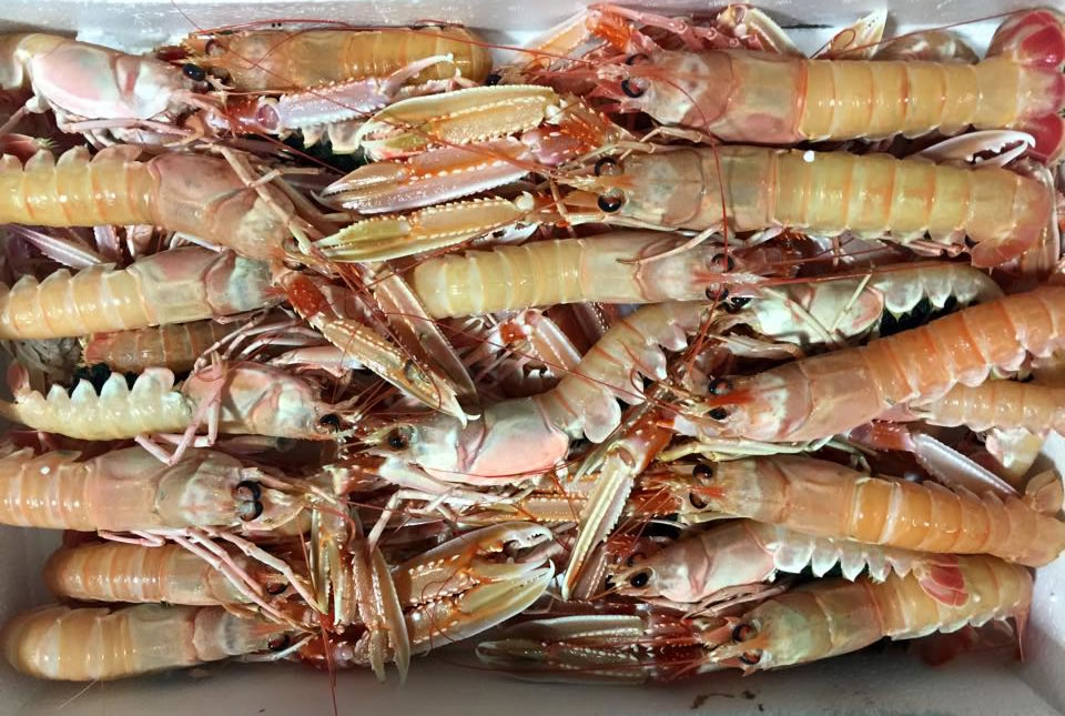 Ittica Donataccio - Wholesale and Retail Seafood